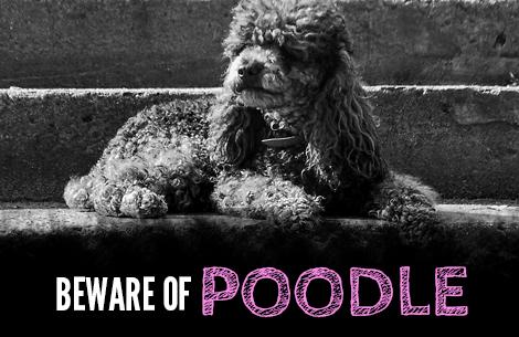 Beware of Poodle